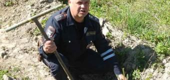 Полицейские из поселка Островское приняли участие во Всероссийском дне посадки леса.